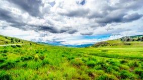 Широкие открытые злаковики и Rolling Hills долины Nicola Стоковое Изображение RF