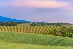 Широкие-oGreen поля на вечере Стоковое Изображение