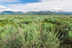 Широкий взгляд на грандиозном парке naional teton стоковое изображение rf