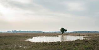 Широкий ландшафт вереска с замороженным феном и солитарным деревом Стоковое Изображение RF