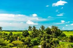 Широкий ландшафт рисовых полей стоковые фотографии rf