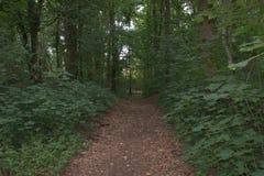 Широкий путь поля, подшитый внутри деревьями и кустами, который водит в лес Стоковые Фото