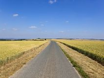 Широкое голубое небо над зрея пшеничными полями и проселочной дорогой стоковое фото rf