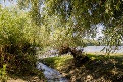 Широкое река и малая заводь в луге лета Пушок тополя Июль -го июнь, Стоковая Фотография