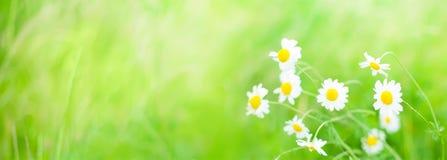 Широкоформатная предпосылка лета цветков Стоковые Изображения RF