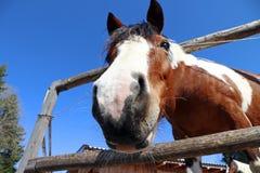 Широкоформатное изображение головы ` s лошади Стоковые Изображения RF