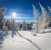 Широкоформатный взгляд леса горы в прикарпатских горах Стоковые Изображения RF