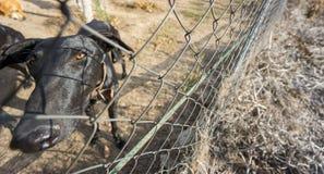 Широкоформатный взгляд загородки унылой собаки запертой задней Стоковая Фотография