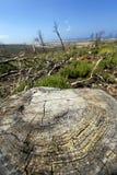 Ампутированный ствол дерева в глуши Стоковые Изображения RF