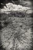 Широкоформатный сухого кустарника Стоковые Изображения RF