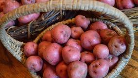 Широкоэкранный размер корзины с малыми красными новыми картошками Стоковое фото RF