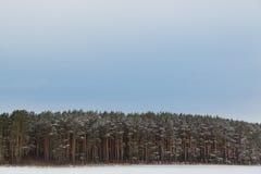 Широко пустой панорамный ландшафт предпосылки с прибрежным лесом в сезоне зимы Стоковые Фото