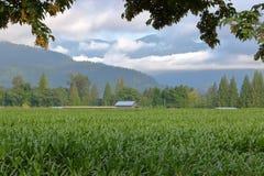 Широко раскройте кукурузное поле горы Стоковое Изображение RF