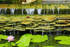Шифер водопада Стоковое фото RF