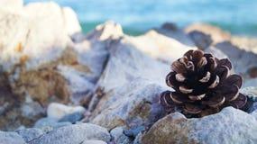 Шишка в камнях Стоковая Фотография RF
