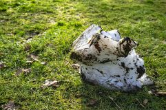 Шишка снега лежит на зеленой траве и плавит под лучами солнца весны стоковые фотографии rf