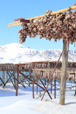 Шкафы головок трески Cod'n Lofoten Стоковые Фото