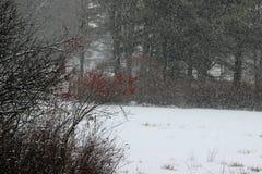 Шквал снега Стоковые Фото