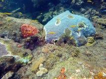 Школа малого желтого заплывания рыб среди трудных и мягких кораллов Стоковая Фотография RF