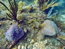 Школа малого желтого заплывания рыб среди трудных и мягких кораллов Стоковое Фото
