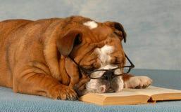 школа повиновению собаки Стоковое фото RF
