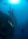 школа рыб коралла следующая, котор нужно огородить стоковая фотография