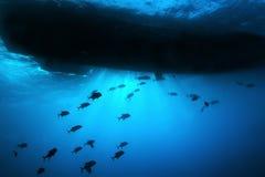 школа рыб шлюпки вниз Стоковые Фото