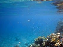 школа рыб Стоковая Фотография RF