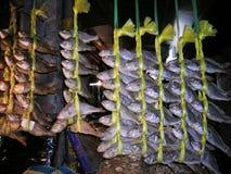 школа рыб стоковые изображения