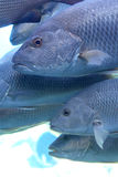 школа рыб Стоковые Фотографии RF