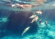 Школа дельфинов обтекателя втулки Стоковая Фотография