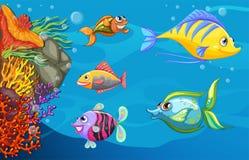 Школа рыб под морем Стоковое фото RF