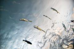 Школа рыб снизу Стоковое Изображение RF