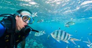 Школа рыб с sealife водолаза акваланга человека исследуя Стоковое фото RF