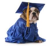 Школа щенка Стоковые Изображения RF