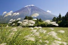 шлейф травы Стоковые Изображения RF