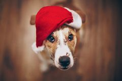 шлем santa собаки С Рождеством Христовым и счастливая концепция Нового Года Sp Стоковая Фотография RF