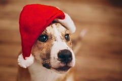 шлем santa собаки С Рождеством Христовым и счастливая концепция Нового Года Sp Стоковые Фотографии RF