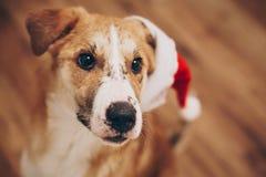 шлем santa собаки С Рождеством Христовым и счастливая концепция Нового Года Sp Стоковое Изображение RF