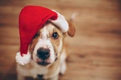 шлем santa собаки С Рождеством Христовым и счастливая концепция Нового Года Sp Стоковое Фото
