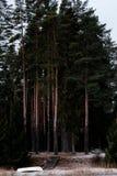 Шлюпка на подобии около леса Стоковое фото RF