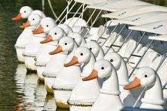 Шлюпка плавая в озеро, шлюпка педали утки закручивая припарковала в линии на парке города стоковые изображения rf