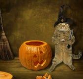 Шляпа 6 летучей мыши кота хеллоуина стоковое изображение rf