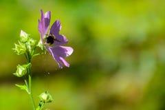 Шмель на цветке стоковое фото