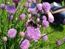 Шмели на цветке Стоковое Изображение RF