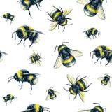 Шмель на белой предпосылке банкы рисуя цветя замотку акварели валов реки Искусство насекомых Ручная работа картина безшовная Стоковая Фотография RF