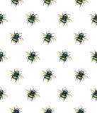 Шмель на белой предпосылке банкы рисуя цветя замотку акварели валов реки Искусство насекомых Ручная работа картина безшовная Стоковое Фото