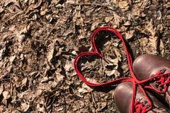 Шнурки влюбленности Стоковая Фотография RF