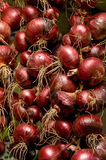шнуры красного цвета луков Стоковое фото RF