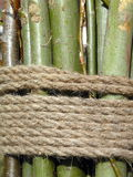 шнур Стоковая Фотография RF